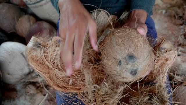 vídeos de stock, filmes e b-roll de peeling de coco - coco