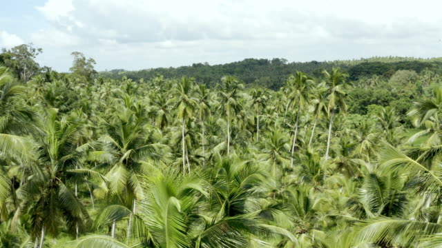 coconut plantation aerial, sri lanka - coconut palm tree stock videos & royalty-free footage