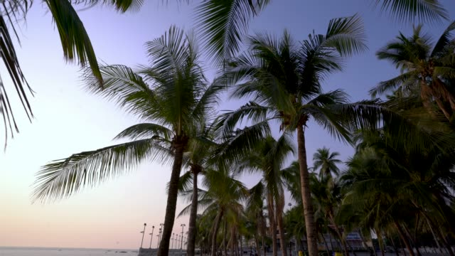 coconut sea and beach - palm leaf stock videos & royalty-free footage