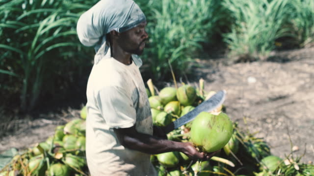 coconut seller - sugar cane stock videos and b-roll footage