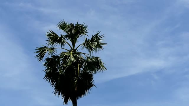 coconut tree along the river in ayuthaya, thailand - ayuthaya province stock videos and b-roll footage