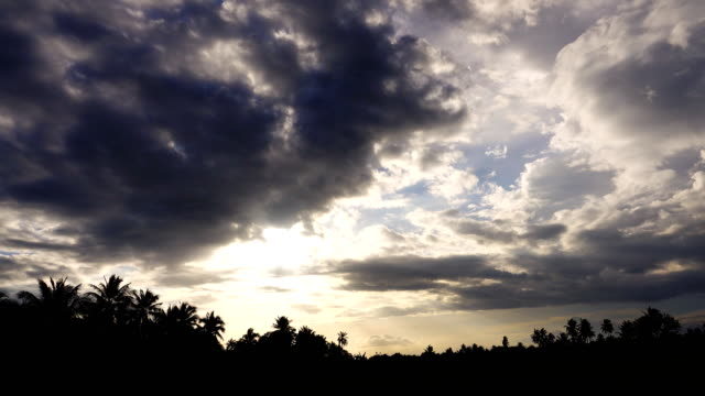 4k: coconut tree at cloud sky sunset - coconut palm tree stock videos & royalty-free footage