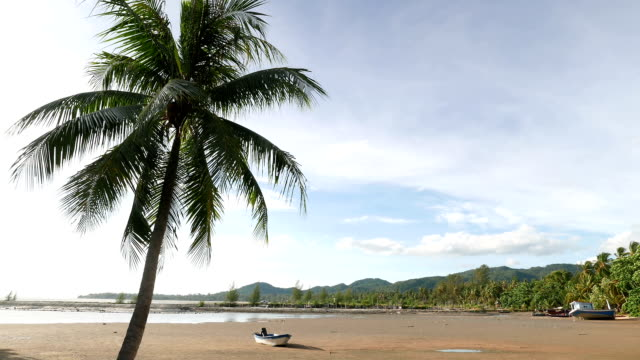 coconut tree on the beach when low tide. - low tide stock videos & royalty-free footage
