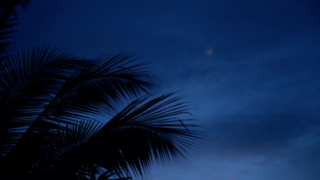 Coconut tree top at night by the beach