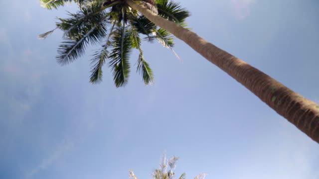 coconut tree tops under blue sky