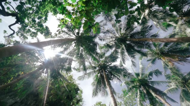 coconut trees against sky - palm leaf stock videos & royalty-free footage