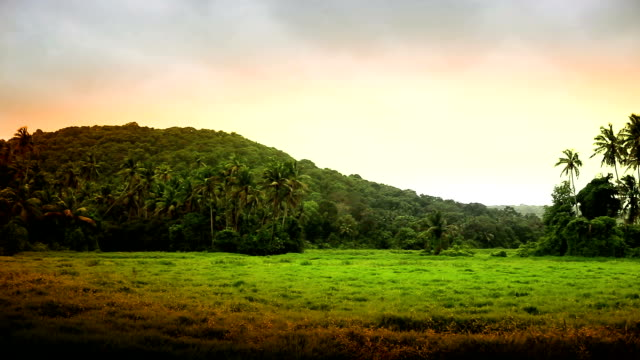 coconut trees nature landscape in goa, india - goa stock videos & royalty-free footage