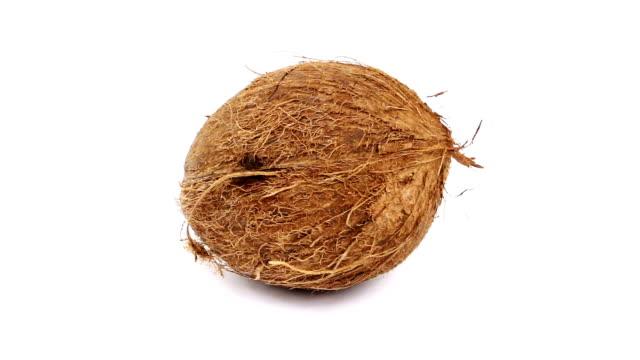 coconut - coconut stock videos & royalty-free footage