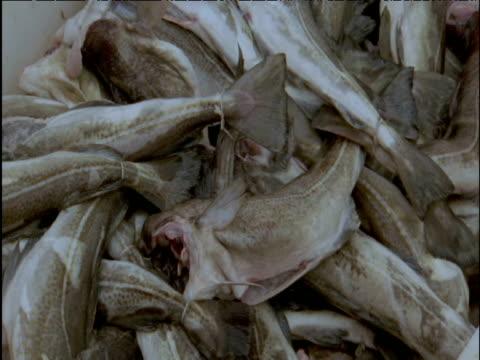 vídeos de stock, filmes e b-roll de cod being thrown onto heap - indústria da pesca