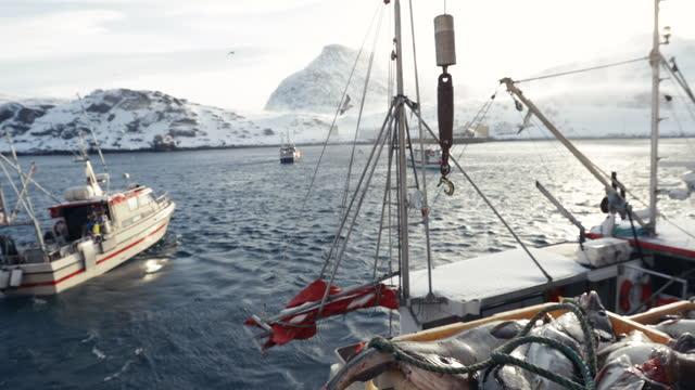 torskfiskeindustrin i det arktiska havet: fiskebåtar fulla med fisk - fiskare bildbanksvideor och videomaterial från bakom kulisserna