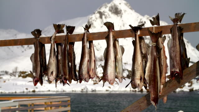 cod stockfish - fishing industry stock videos & royalty-free footage