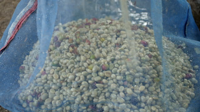 coffee bean falling from milling machine. - bean bag stock videos & royalty-free footage