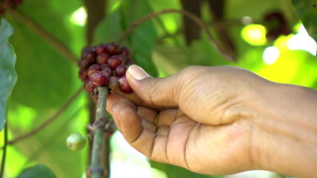 stockvideo's en b-roll-footage met coffee bean in de fabriek - koffie