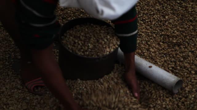vídeos y material grabado en eventos de stock de coffee bean production plant close up - cultura indonesia