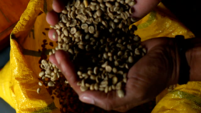 coffee bean slow motion - fagiolo video stock e b–roll