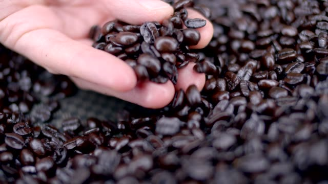 coffee beans - legume family stock videos and b-roll footage