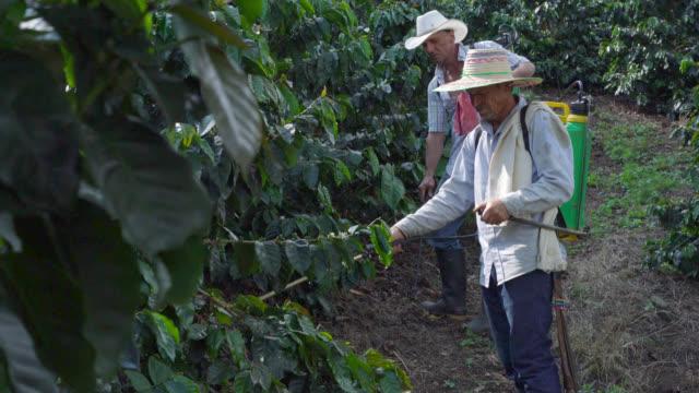 Coffee farmers fumigating the coffee crop