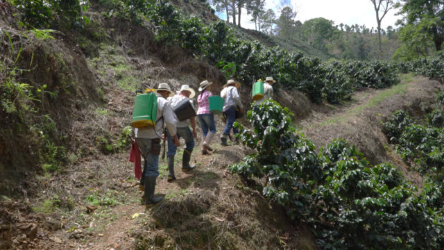 Coffee farmers walking up the hill to collect and fumigate the coffee plants