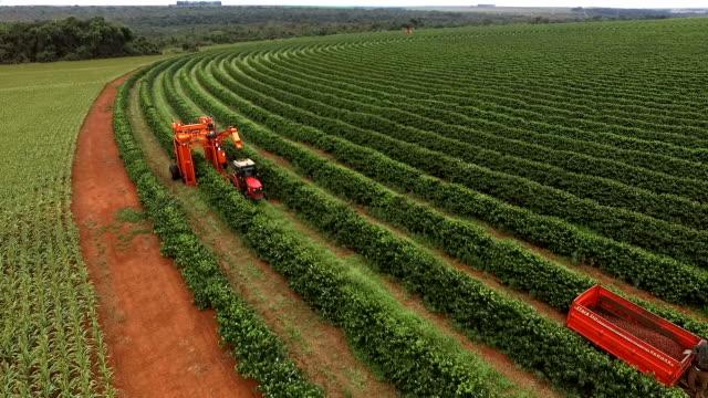 vídeos de stock, filmes e b-roll de colheita de café - culturas