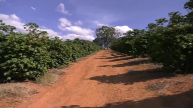 vídeos de stock, filmes e b-roll de coffee plantation, brazil - estrada rural