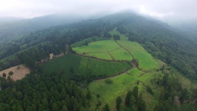 coffee plantation on alpine area / san jose, costa rica - eco tourism stock videos & royalty-free footage