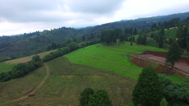 coffee plantation on alpine area / san jose, costa rica - 農家の家点の映像素材/bロール