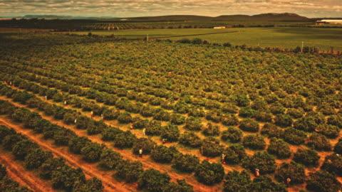 coffee plantation - south america stock-videos und b-roll-filmmaterial
