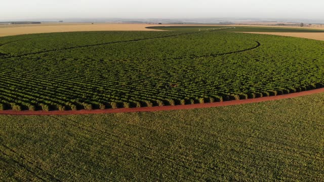 coffee plantation - sorghum stock videos & royalty-free footage