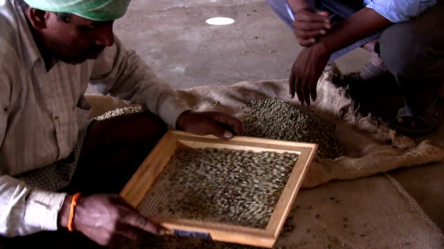 Coffee processing and selection of beans