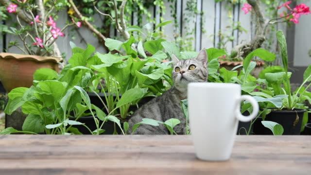 kaffetid med tabby katt leker i grön trädgård utomhus - het dryck bildbanksvideor och videomaterial från bakom kulisserna
