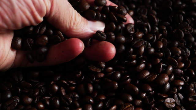 coffee trader examining roasted arabica coffee beans - roasted coffee bean stock videos & royalty-free footage