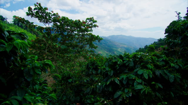 coffee trees sit in the rural mountains in central america. this shows the scope of coffee, and where it originates! - plantation stock videos & royalty-free footage