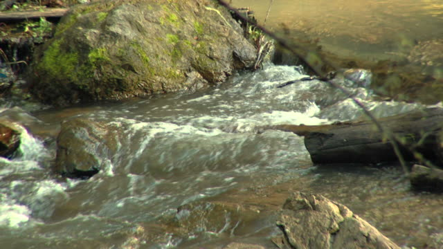 coho salmon upstream hd720p30 - spawning stock videos and b-roll footage