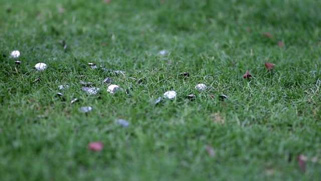 Coins falling on grass surface
