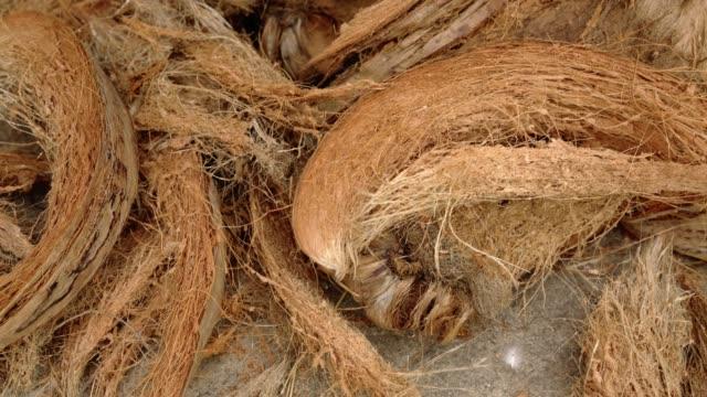 cocco o fibra di cocco. - buccia video stock e b–roll