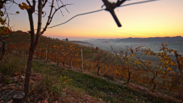 cold fall morning in the vineyard - prekmurje stock videos & royalty-free footage