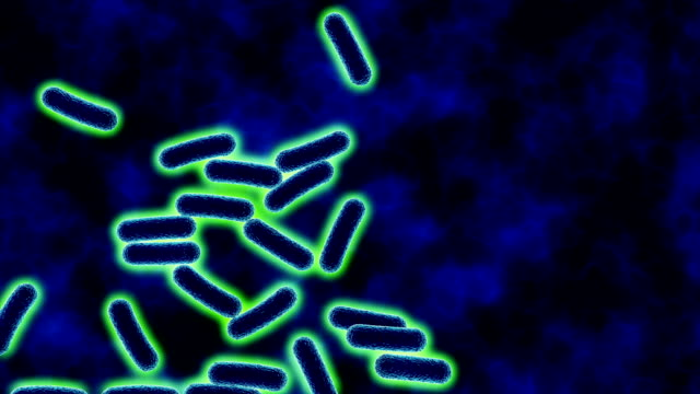 e coli bacteria dividing or multiplying - bacterium stock videos & royalty-free footage
