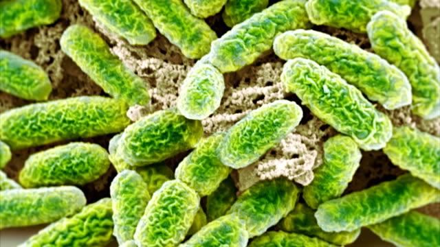 """""""e coli bacteria, sem"""" - eschericia coli stock-videos und b-roll-filmmaterial"""