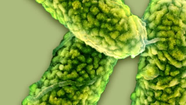 vídeos y material grabado en eventos de stock de e coli bacteria, sem - forma de barra