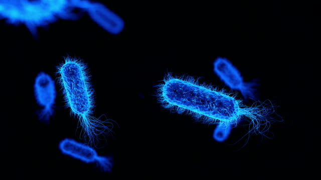 e. coli bacterium blue medical background - bacillus subtilis stock videos & royalty-free footage