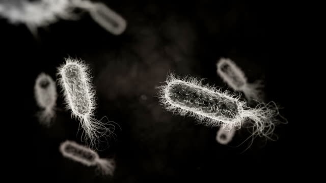 e. coli bacterium monochrome medical background - urology stock videos and b-roll footage