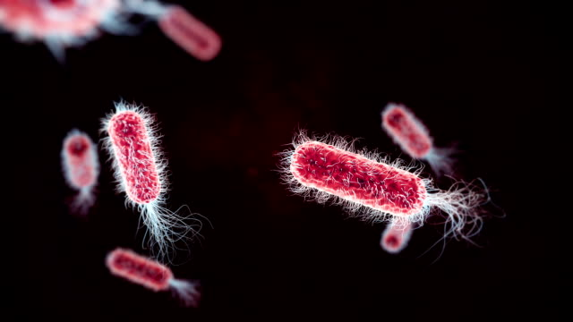 e. coli bacterium red medical background - bacterium stock videos & royalty-free footage