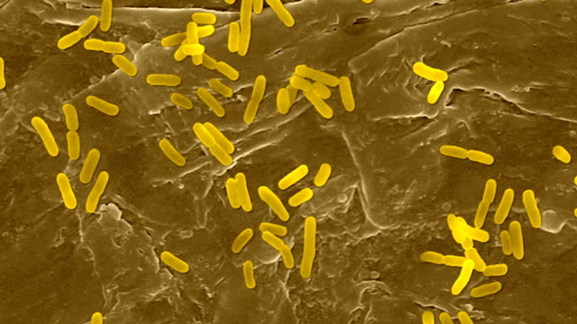 e coli on the human skin surface, sem - bacillus subtilis stock videos & royalty-free footage
