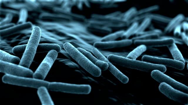 e coli virus sfondo blu - escherichia coli video stock e b–roll