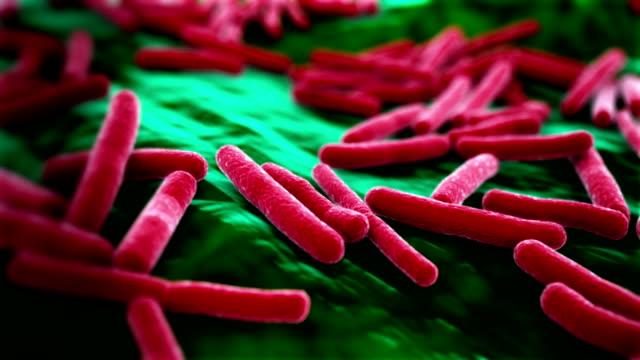 virus e coli sfondo - escherichia coli video stock e b–roll
