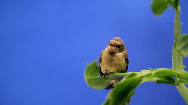 Colibri bird on branch