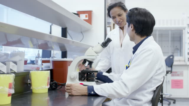 vídeos de stock e filmes b-roll de colleagues working in laboratory discuss medical sample results - cancro
