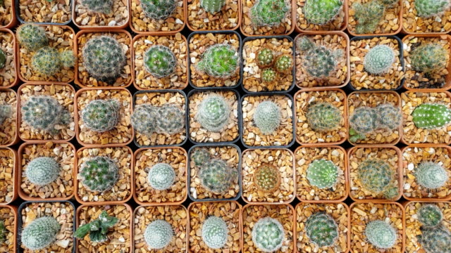 collection of various cactus and succulent plants. - cactus texture stock videos & royalty-free footage