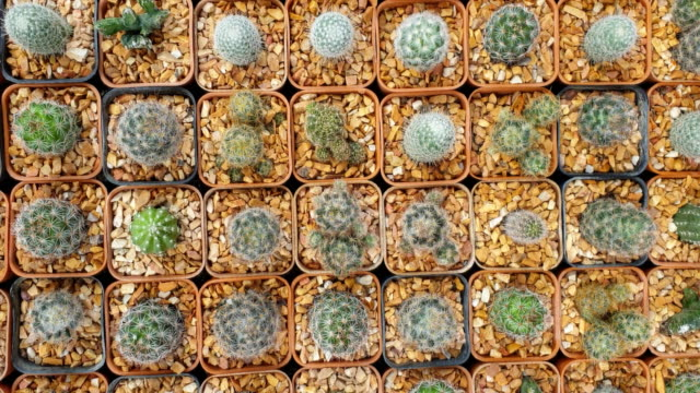 collection of various cactus and succulent plants. - cactus stock videos & royalty-free footage