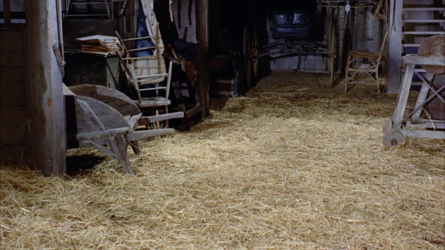 MS Collie dog and two half-grown up pups in stall and pup running across barn